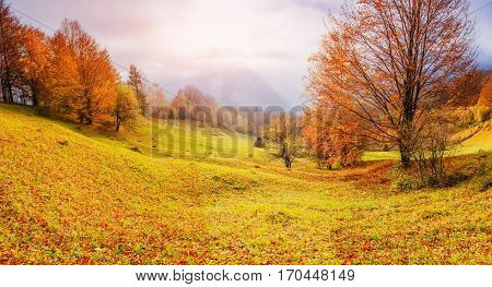 rock massif in the Carpathians. Carpathian, Ukraine Europe