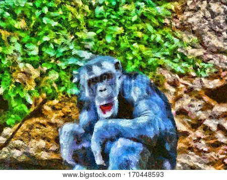 The Adult Chimpanzee. Illustration