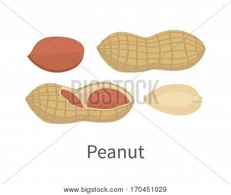 Peanut vector in flat style design. Traditional nutritional snack, diet product, culinary ingredient, source of protein, vitamins, elements, fatty acids and paste. Isolated on white background.