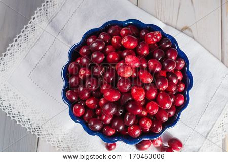 Red cranberries in a blue bowl. Ripe berries of Vaccinium macrocarpon also large cranberry American cranberry or bearberry.