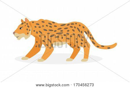 Jaguar, wild cat Panther isolated on white. Cat family member. Spotted cat resemble to leopard. Big wild cat. Pantherinae jaguar. Compact and well-muscled animal. Flat style. Vector illustration