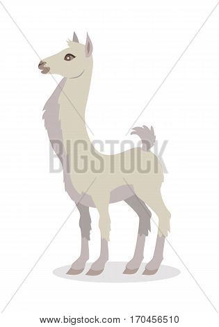 Llama isolated on white background. Llama domesticated South American camelid, widely used as a meat and pack animal. Alpaca, guanaco, vicuna llama. Funny cartoon creature. Vector illustration