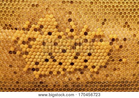 Cell larvae of bees of all ages. Beekeeping