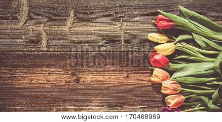 fresh spring tulips and Easter eggs   on weathered wooden background