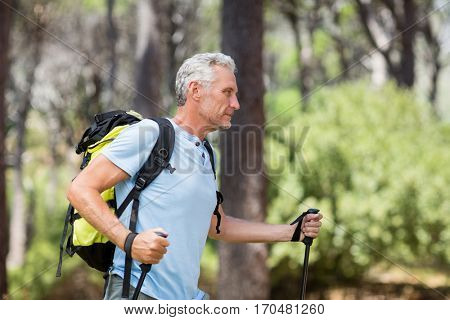 Profile view of a man hiking in the wood