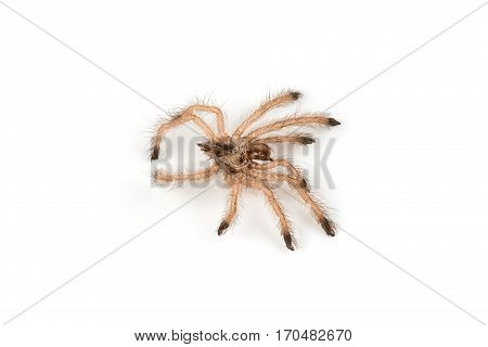 Isolated shoot of spider's molt on white background