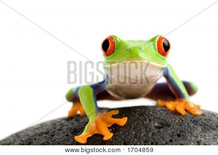 Frog On The Rocks