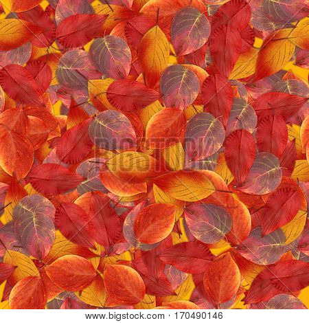 Seamless Background With Bright Multicolored Leaves Of  Hawthorn