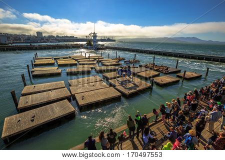 San Francisco, California, United States - August 14, 2016: aerial view of tourist crowd observe popular Sea Lions on wooden platforms. Pier 39 at Fisherman's Wharf. American travel in San Francisco.
