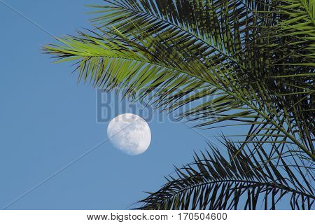Moonrise on the background of the daytime sky, palm branches in