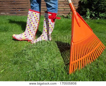 Woman raking freshly cut grass in the garden