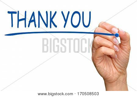 Thank you - female hand with blue marker writing text on white background