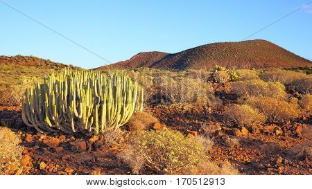 Panoramic view of desert with cacti at sundown on Tenerife, Canary Islands
