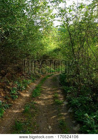 Photo of a pathway surrounded by greenery