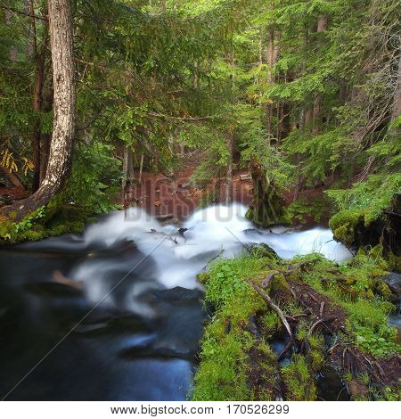 The silky white water of Clear water Creek in Douglas County in Western Oregon as it flows through the forest trees and mossy logs then over the falls on a summer day.