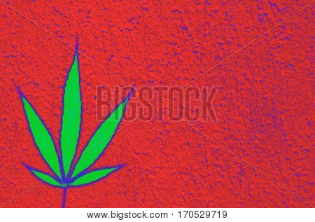 Bright green abstract marijuana hemp ganja leaf on coarse red background with space