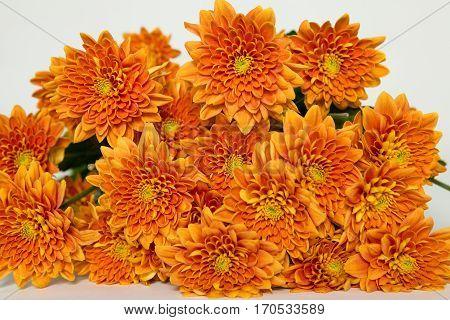 Chrysanthemum Bartoli, orange chr bouquet, narancs krizantém csokor, krizi