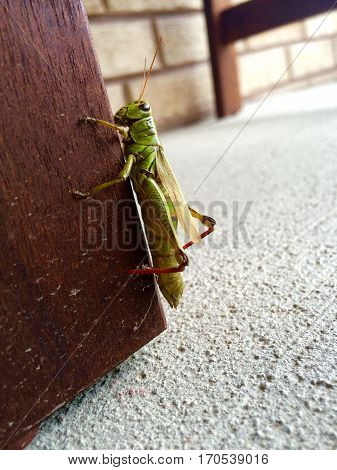 This grasshopper decided to lounge on our front porch
