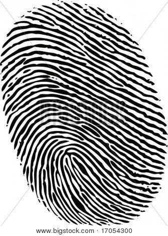 black ink fingerprint on white background in vector