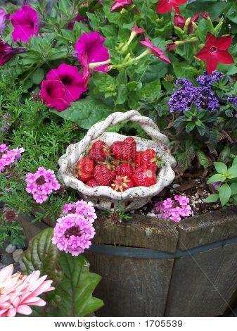 Strawberry Basket--Long View