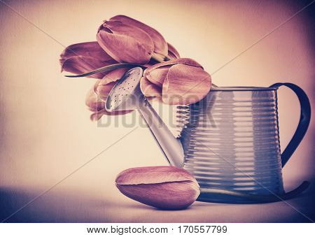 Retro style photo of a tulips bouquet in the metallic watering can over grunge background, stylish design of gift for Valentine day or Mothers day
