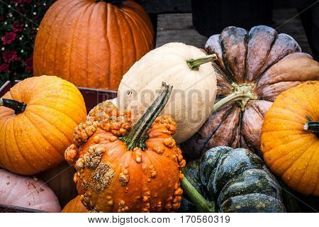 Assortment of colorful and various-textured pumpkins at market