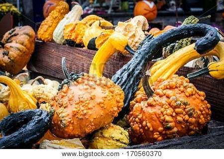 Colorful and textured pumpkins and squash at a country market