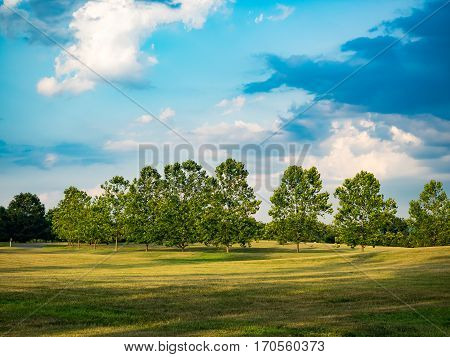Rural scene of trees and grassy field with sky and clouds