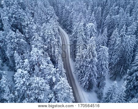 bird's eye view on road in snowy winter forest