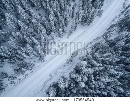aerial  view of forest covered with snow  ,bird's eye view