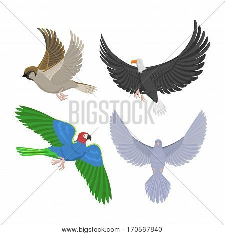 Set of different flying birds vector illustration. Cartoon cute fauna feather flight animal silhouette. Spring freedom natural concept. Wildlife drawing isolated pet.