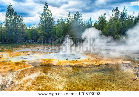 Geyser erupting. Norris Geyser Basin, Yellowstone National Park, USA