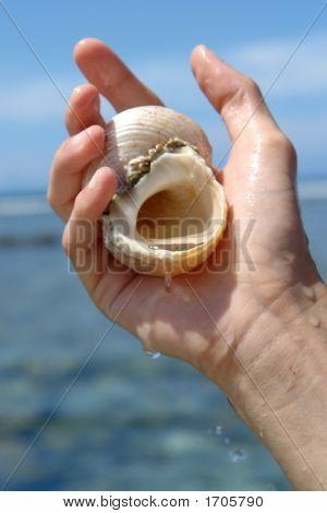 Shell Sacree,