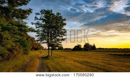Nice evening landscape with rut road near meadow border