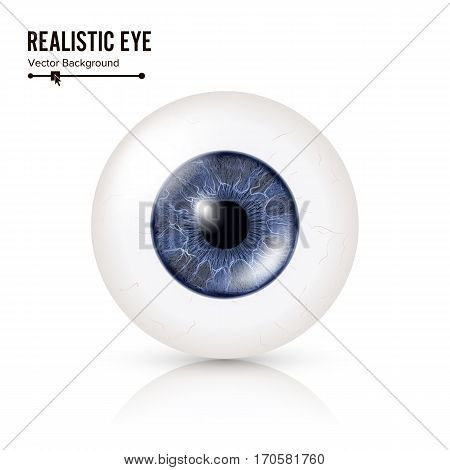 Realistic Human Eyeball. 3d Glossy Photorealistic Eye Detail With Shadow And Reflection. Isolated On White Background. Vector Illustration.