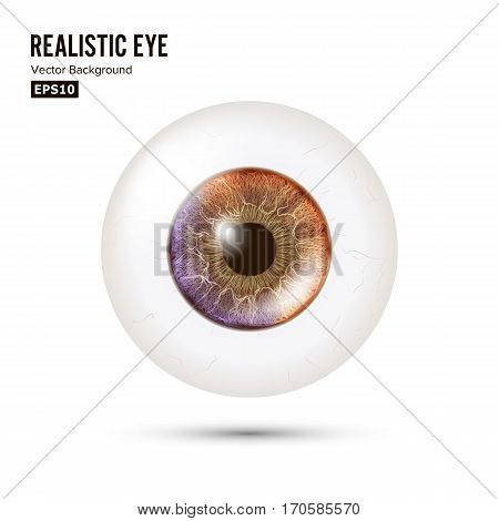 Photo Realistic Eyeball. Human Retina. Vector Illustration Of 3d Human Glossy Eye With Shadow And Reflection. Front View. Isolated On White Background.
