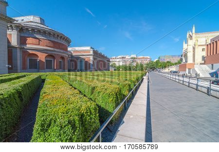 Clear blue sky, people, tourists, locals & visitors go about their day.   Wide angle view.  Diagonal rows of manicured bushes behind The Prado Museum.  Museo del Prado behind the Spanish Prado National art museum, in central Madrid, Spain.
