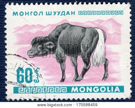 MONGOLIA - CIRCA 1968: Postage stamp printed in Mongolia shows image of a little buffalo, from the series