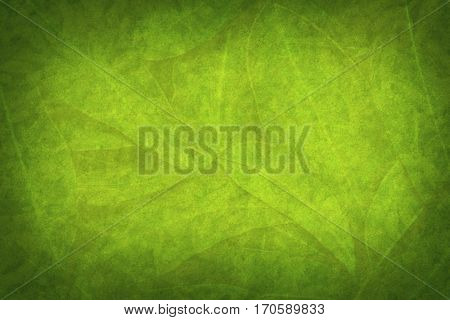 Grunge nature background with green leaves.  Dark Vignette.