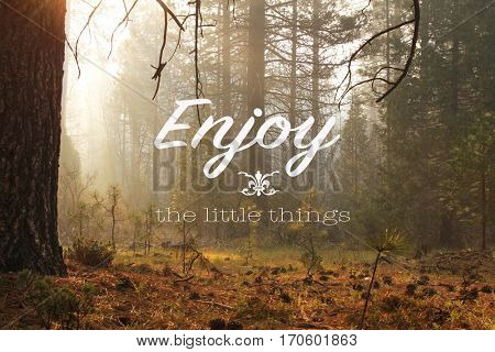 Inspirational quote Enjoy the little things on a picture with an atmosphere in a misty forest early in the morning