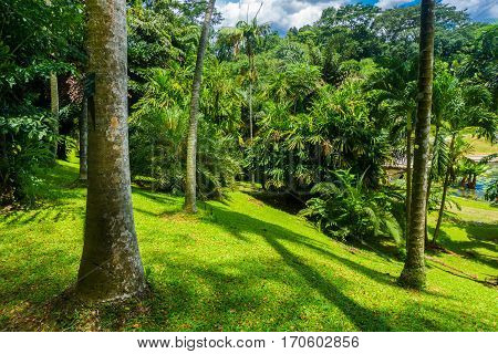 A landscape in a hill with big and high tree, bushes and green grass photo taken in Kebun Raya Bogor Indonesia java