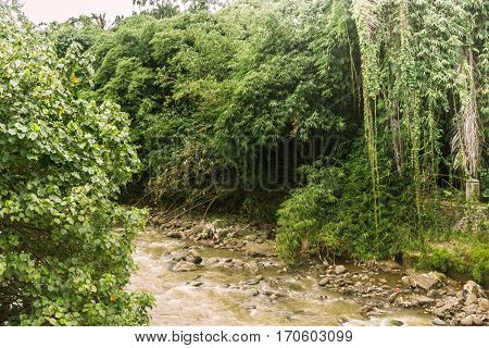 A river with rocks surrounding by trees and bushes photo taken in Kebun Raya Bogor Indonesia java