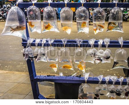 selling beautiful fishes in plastic wrap for decorative fishes photo taken in Bogor Indonesia java