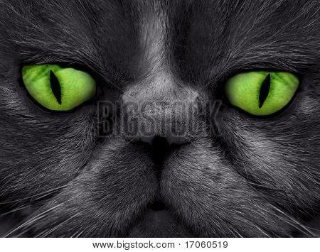 Cat face macro photo