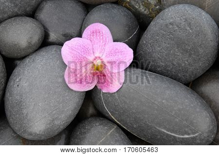 Pile of stones with pink orchid