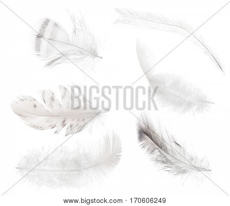 set of feathers isolated on white background
