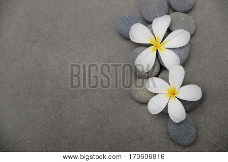 Two frangipani with pile of gray stones –gray background