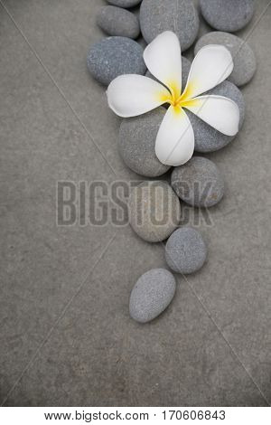 frangipani with pile of gray stones on grey background.