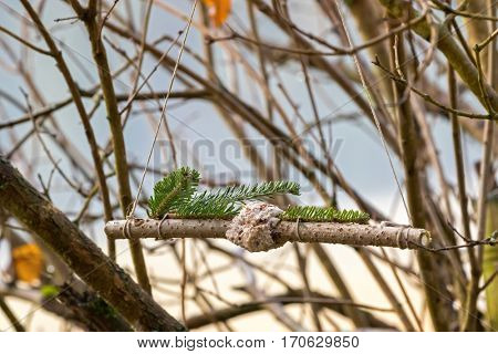 Homemade bird feeder, coconut fat cookie with nut, raisin wrapping around branch decorated with pine twig hanging on tree in winter, Austria Europe