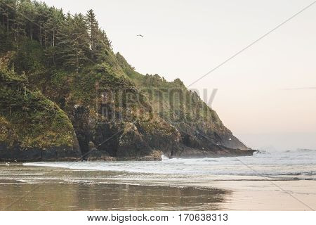 Birds fly over rocky forested coastline at Heceta Head Lighthouse State Scenic Area.